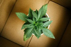 Report: Cannabis Sales Up Among Boomer, Gen Z.