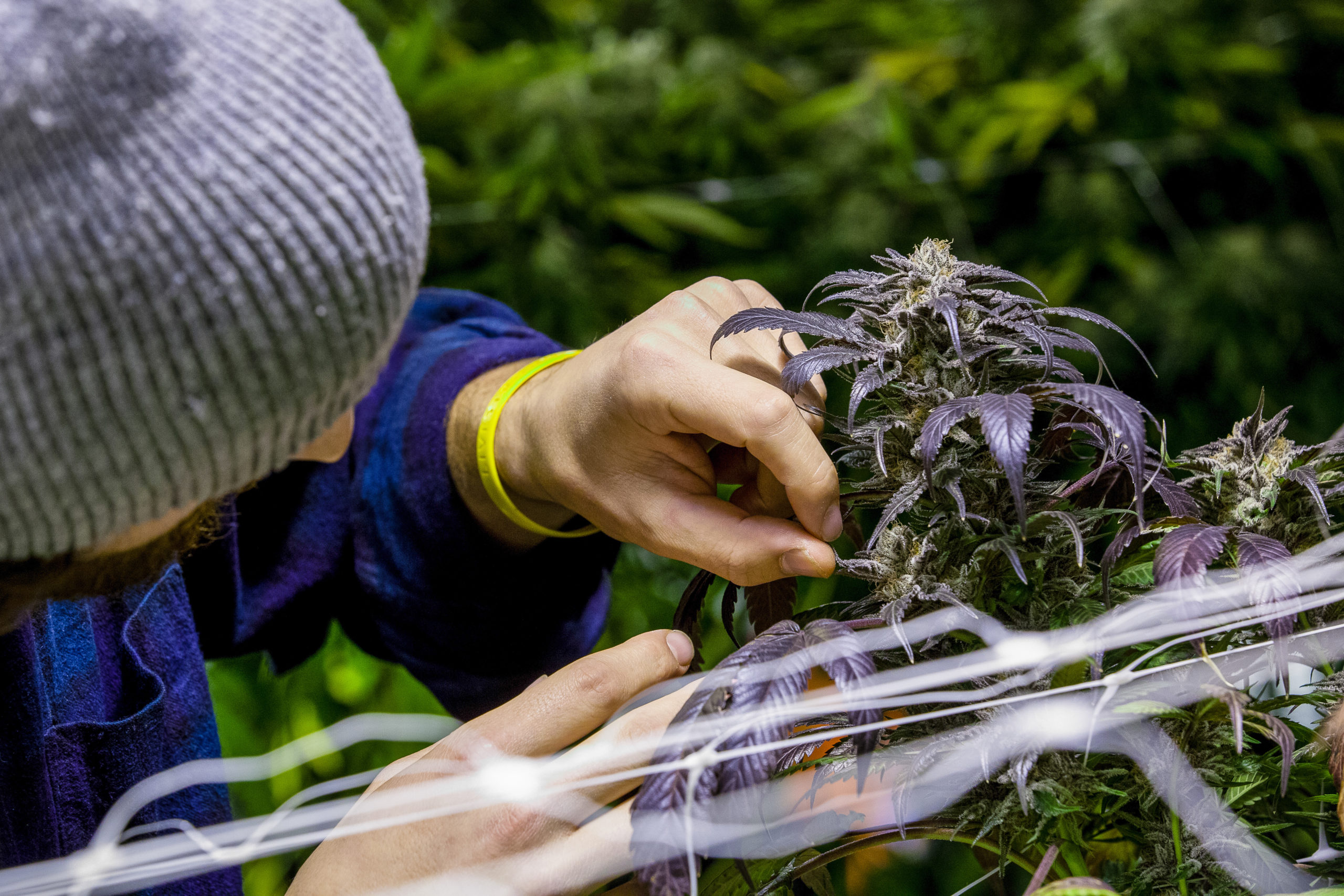 Illinois Legal Weed Sales Total Nearly $40 Million in 1st Month.