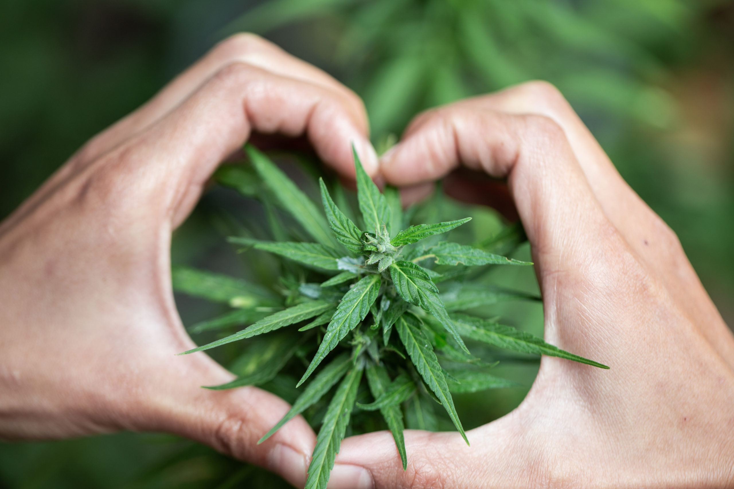 Canadian Moms Band Together to Fight Cannabis Stigma.