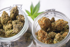Hight Times to Buy Dispensary Licenses in Los Angeles and Las Vegas.