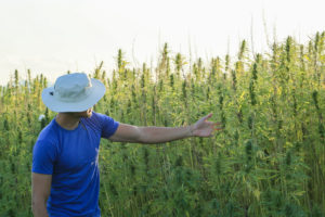 Cannabis Jobs Report: Legal Cannabis Now Supports 243,000 Full-Time American Jobs.