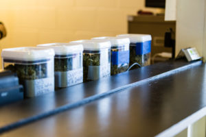 Weed Sales are Booming in LA, Thanks to Fears of Corona-virus Quarantine.