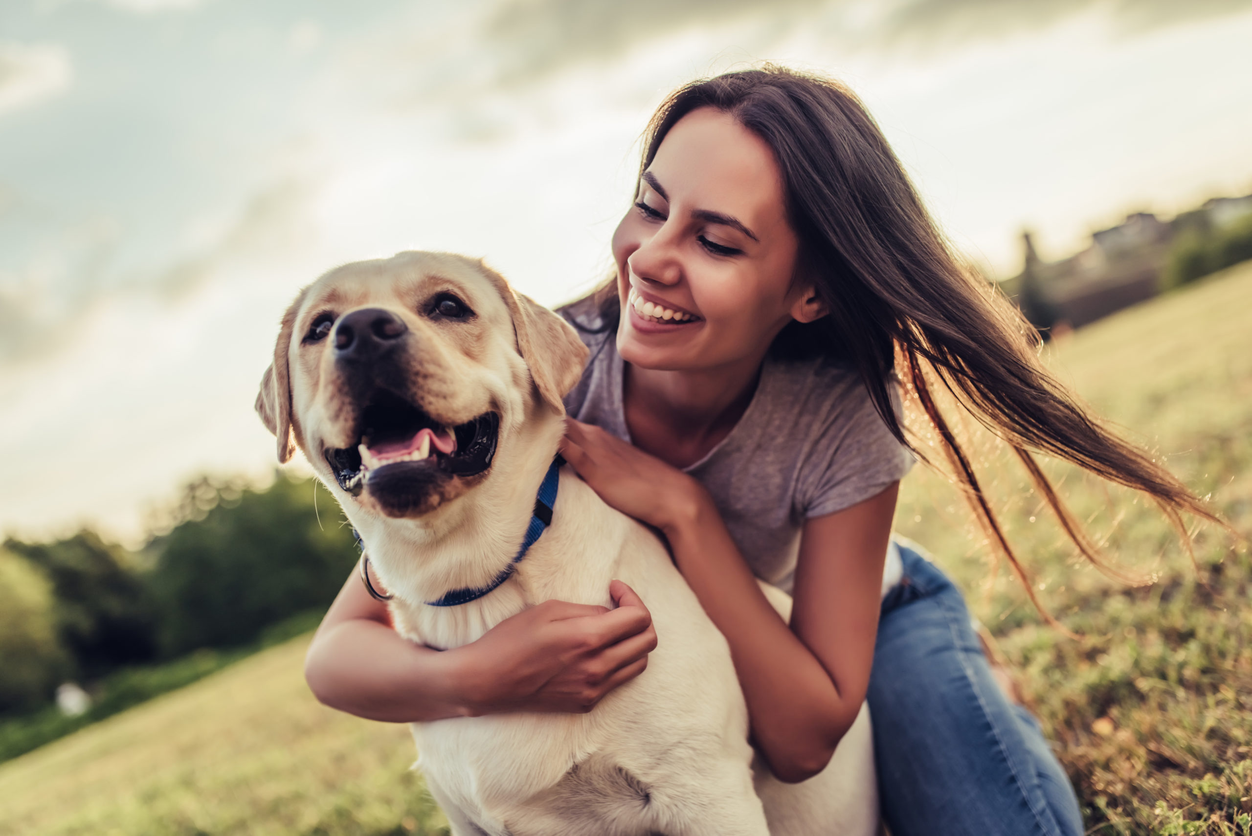 CBD Can Stop Brain Cancer in Humans and Dogs, Study Finds.