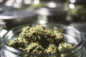 What Are the Strongest Cannabis Strains?