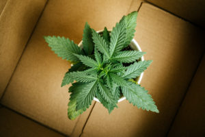 Why Cannabis Delivery is About More Than Transporting Herb.