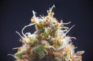 What is the Best Quantity for a Dose of Cannabis?