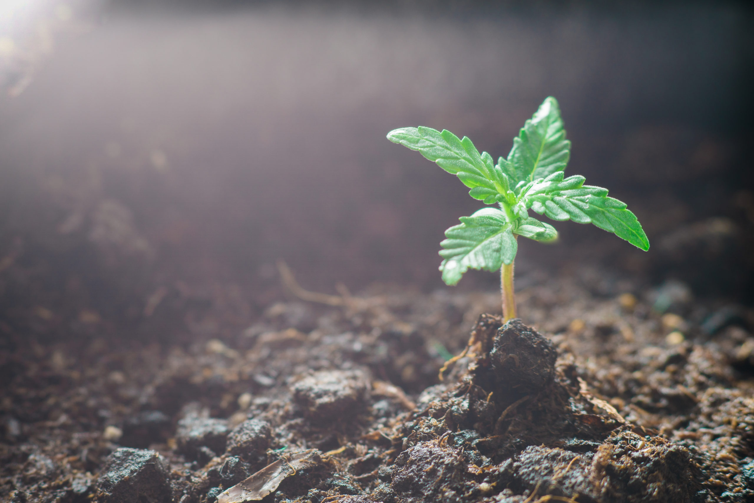How to Make Organic Soil for Your Weed.