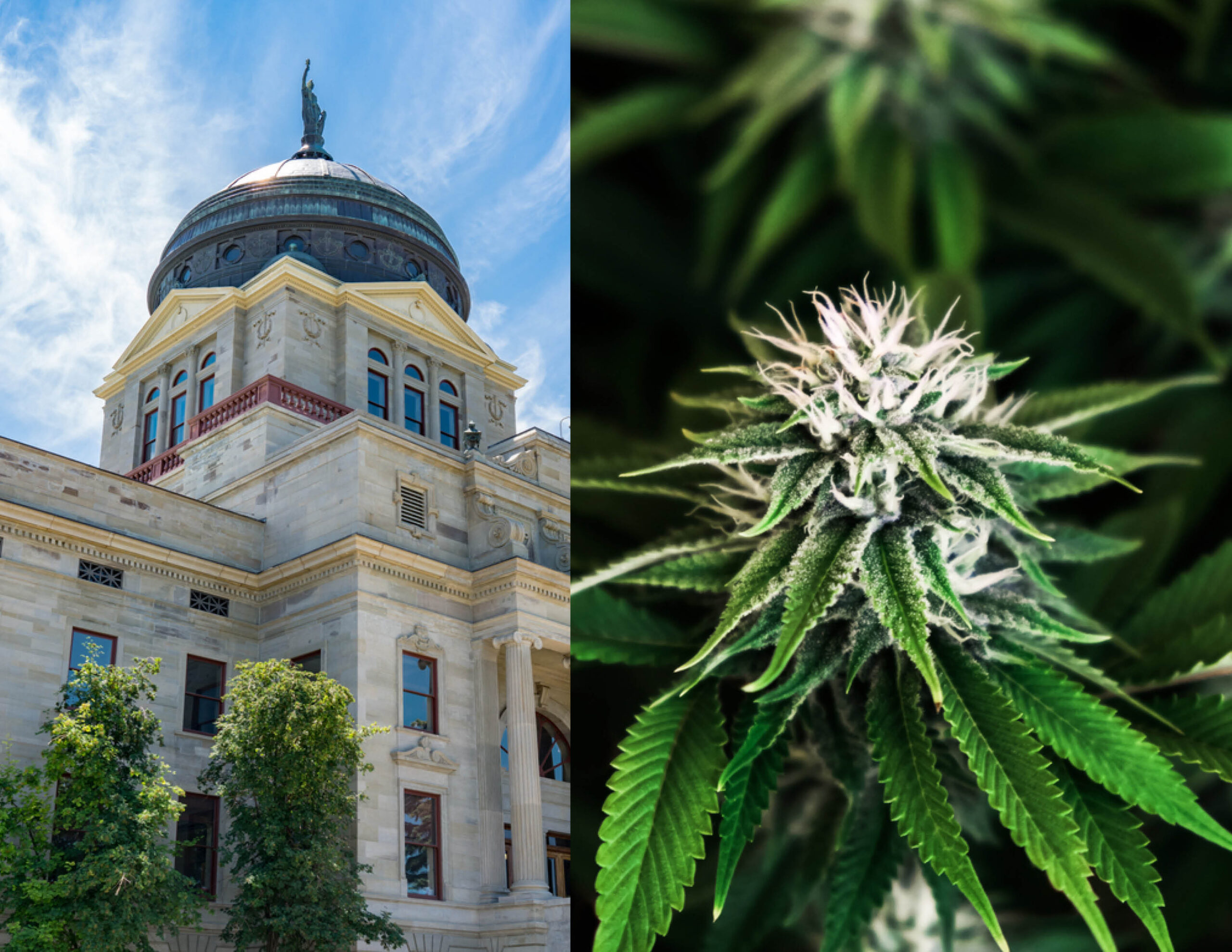 Montana House Revives Bill To Implement Marijuana Legalization After First Defeating It
