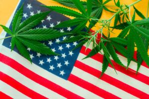 Four More States Could Still Legalize Marijuana This Year After New Mexico, New York And Virginia