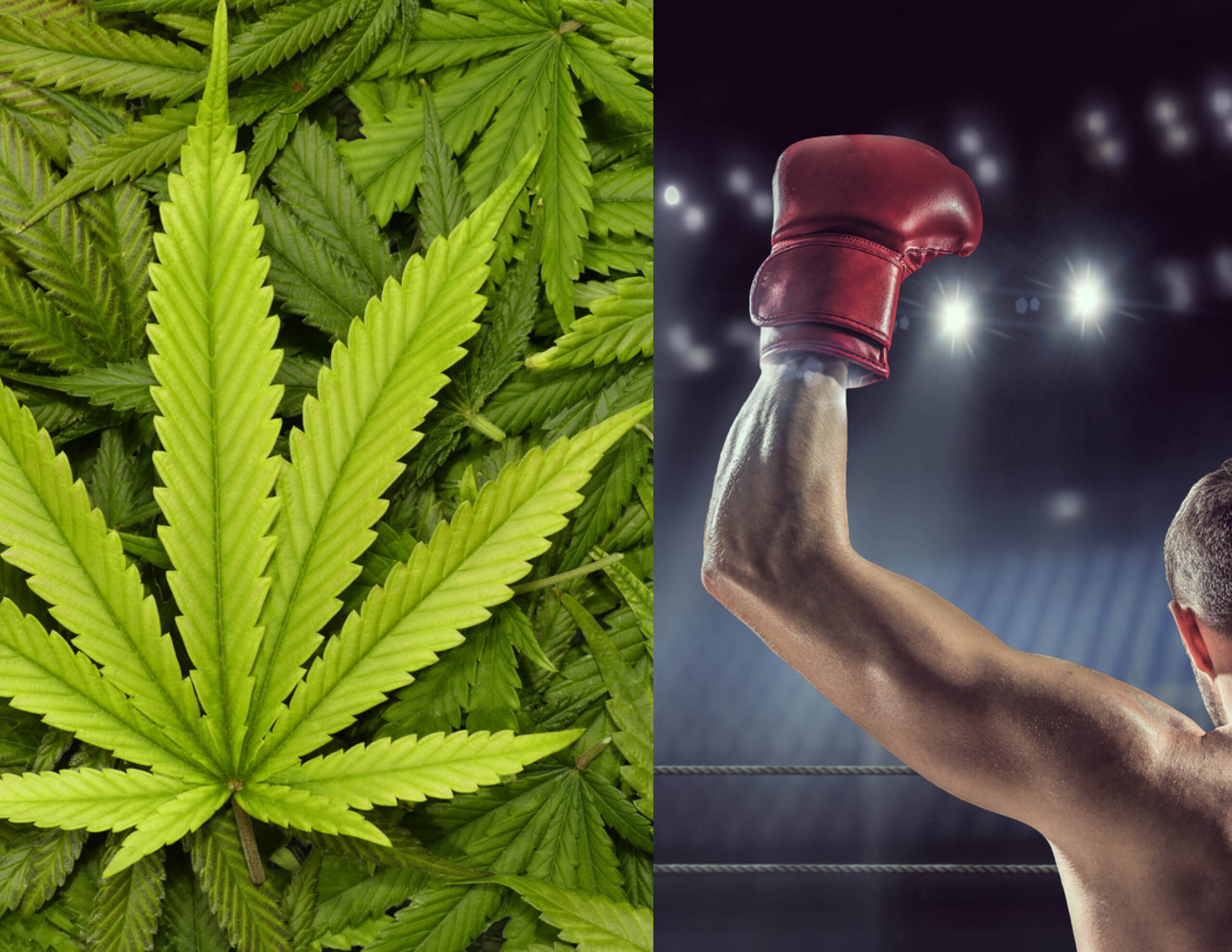 Florida will no longer test boxers, MMA fighters for marijuana