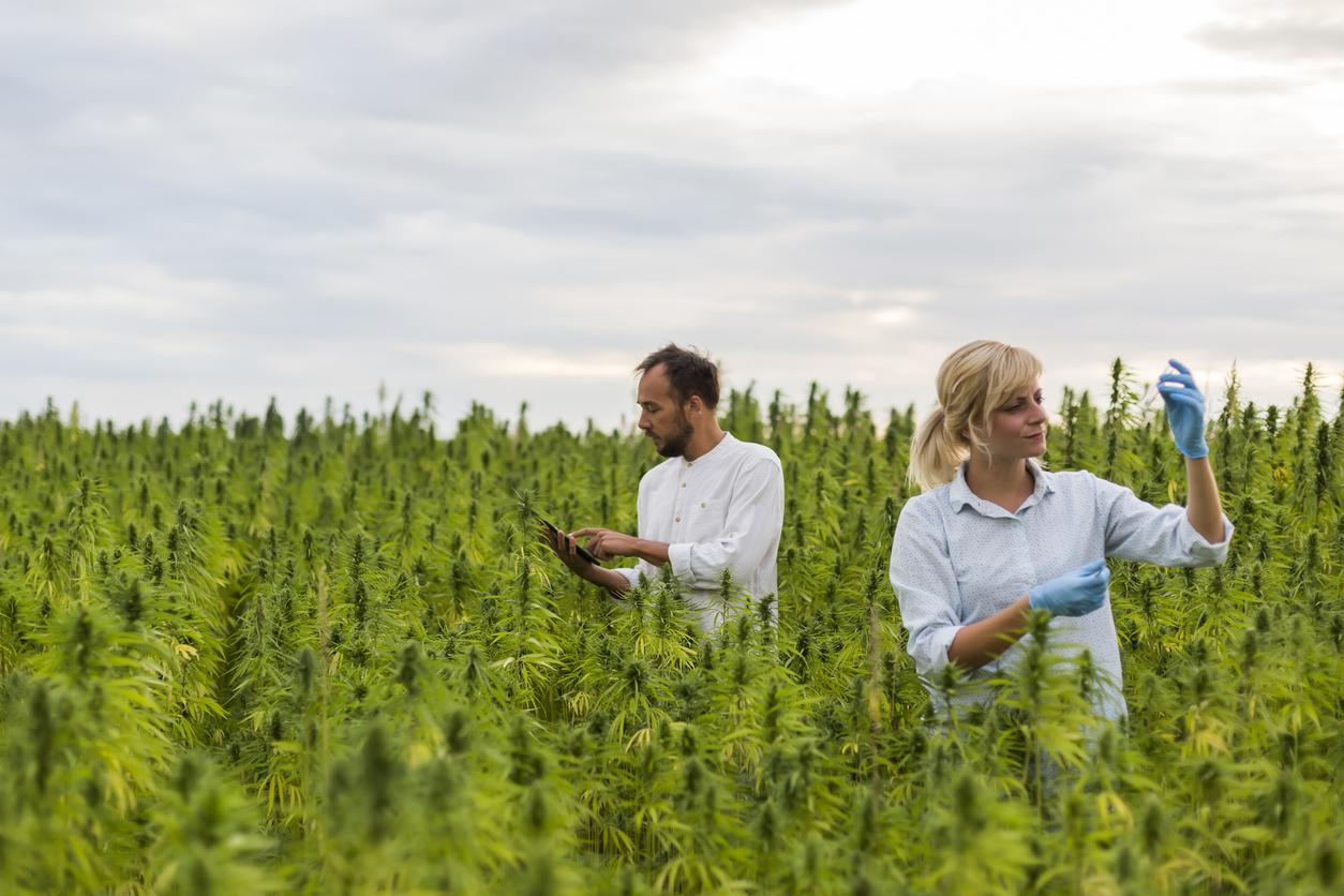 Southern California marijuana farmers notch legal victory