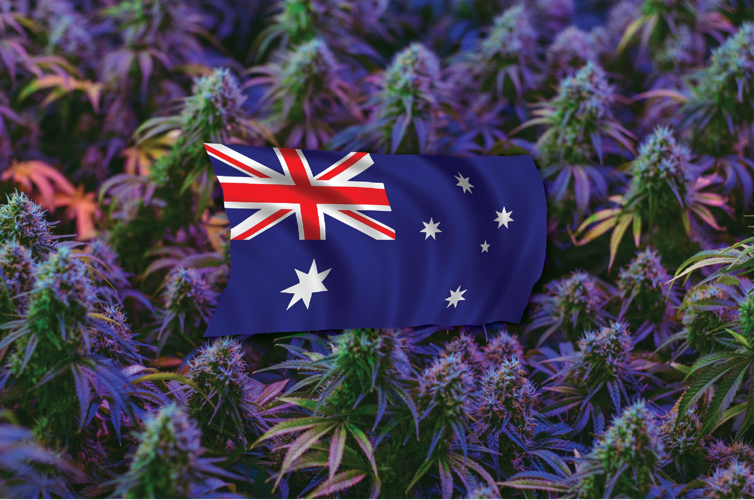 As medicinal cannabis rockets globally, here's how Australia can become a production powerhouse