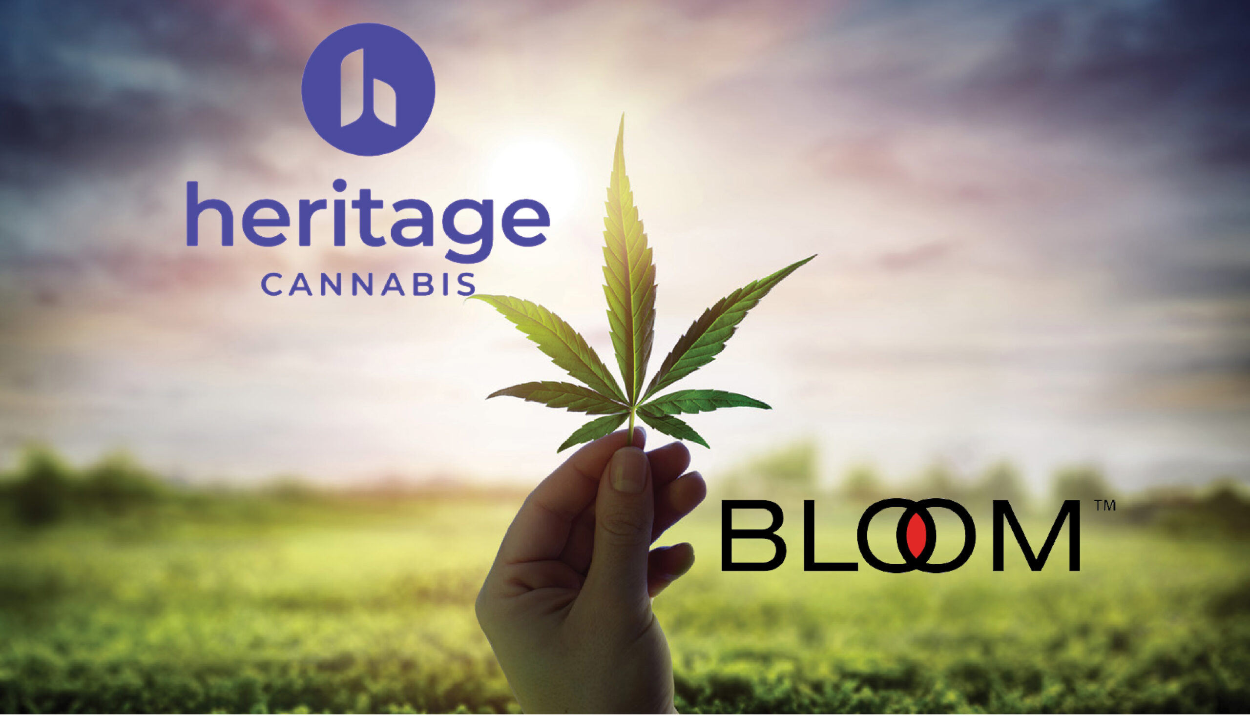Heritage Cannabis acquires recreational cannabis group Bloom Brands
