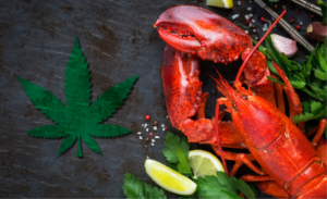 Lobsters given marijuana before they're boiled to see if it eases pain and anxiety