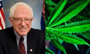 Bernie Sanders Touts 'Progress' On Legalizing Marijuana And Ending The Drug War
